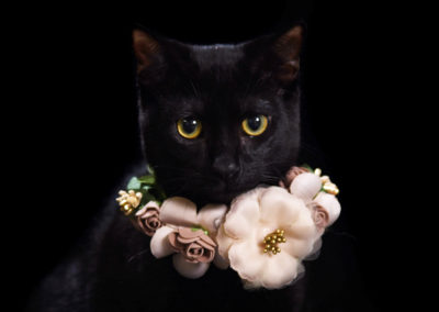 Beautiful cats portraits by DYRafaeliphotography.com 9